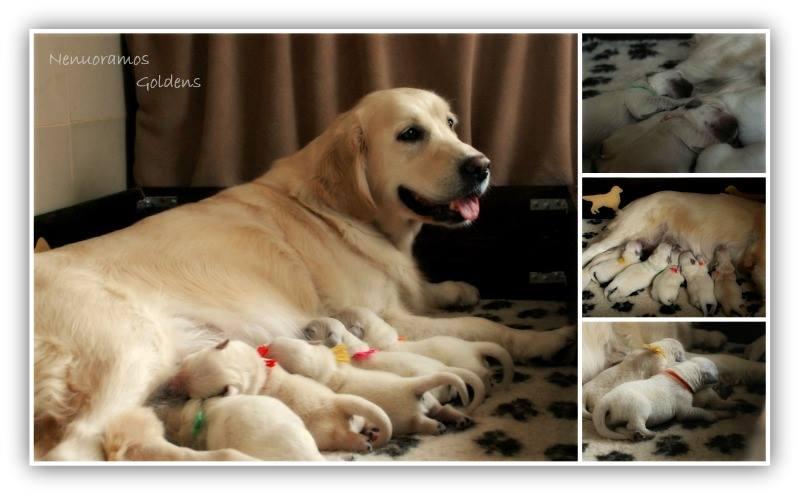 Megė su mažyliais